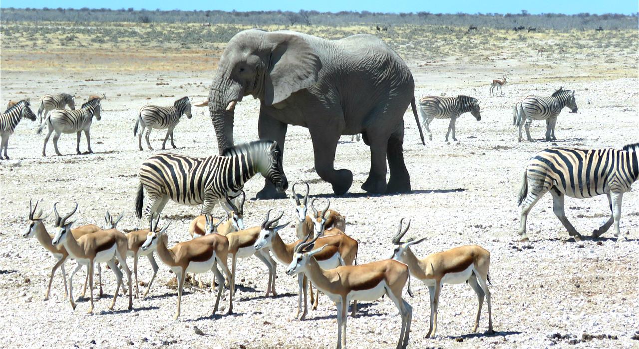 Afrique du Sud & Namibie (26 jours)