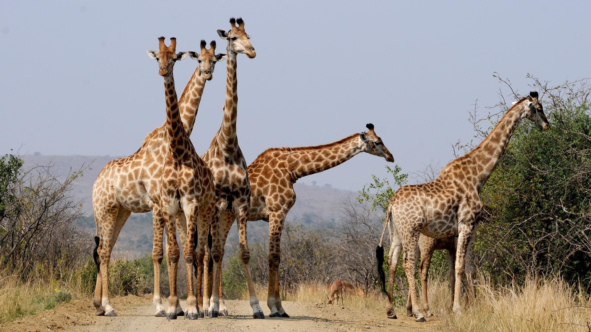 Jour 13:  Parc Kruger